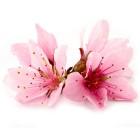 Розовое дерево эфирное масло (5 мл)