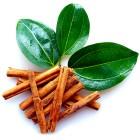 Корица листья эфирное масло (5 мл)